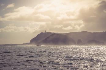 Cape Schanck from the ocean