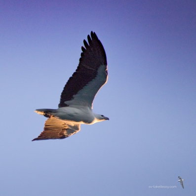 Soaring high like a sea eagle as we make our dream come true