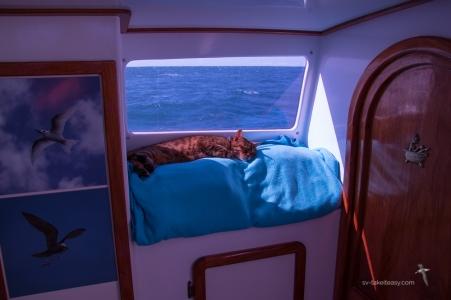 New favourite snooze spot!