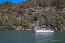 Frangipani coming to raft up