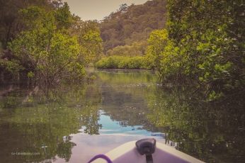 Mangrove up Smiths Creek
