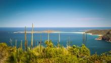 Fingal Bay from Yaccaba Head