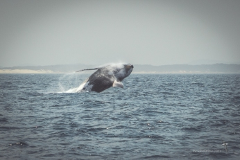 Exhileration - migrating with the whales
