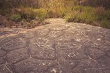 Petroglyphs of fish and wallabies