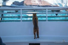 Bengie checking out what's happening at the back of the boat