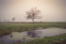 The fog hung around all day at Beaumont giving the farmland a nostalgic look