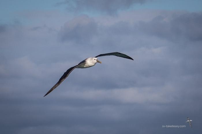 Bass Strait --5151