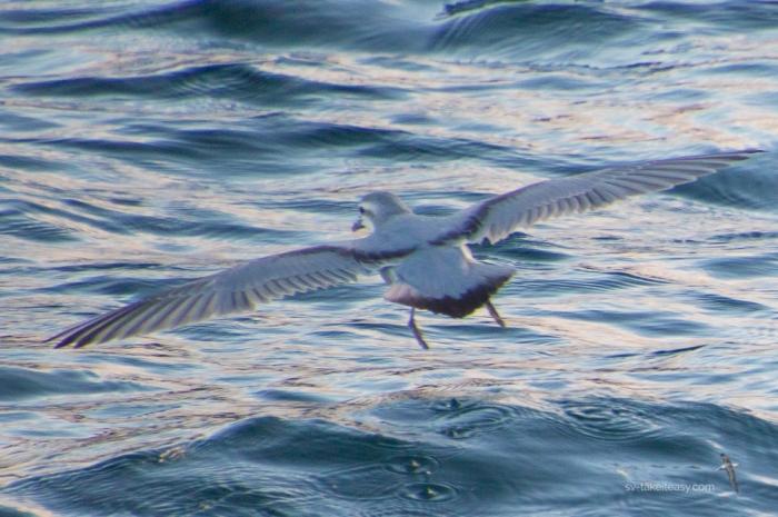 Bass Strait - -5413