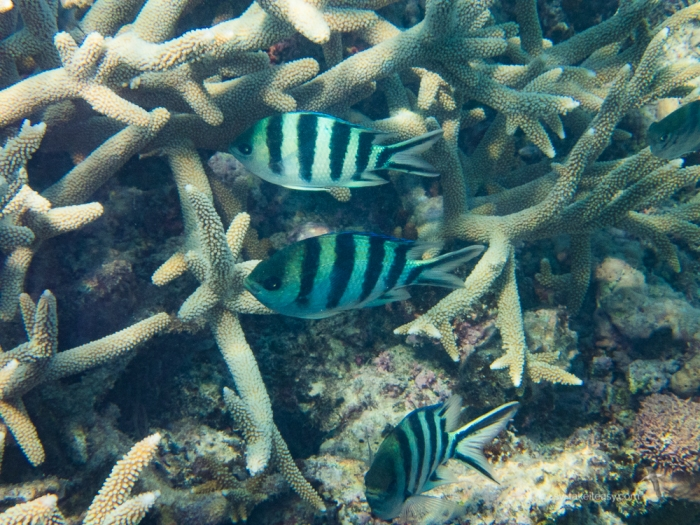 Fitzroy Reef -7160010.jpg