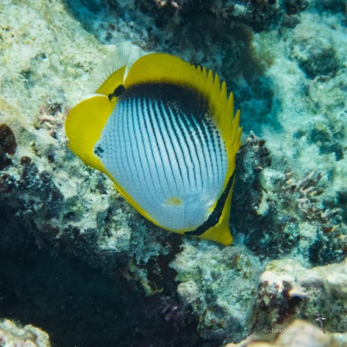 Fitzroy Reef -7160027.jpg