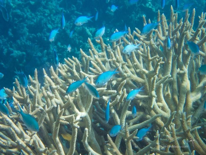 Fitzroy Reef -7170055.jpg