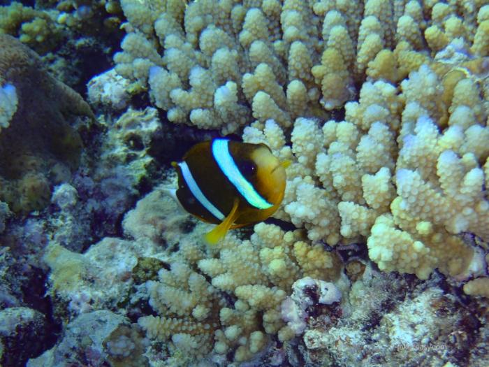 Wistari Reef -3080033.jpg
