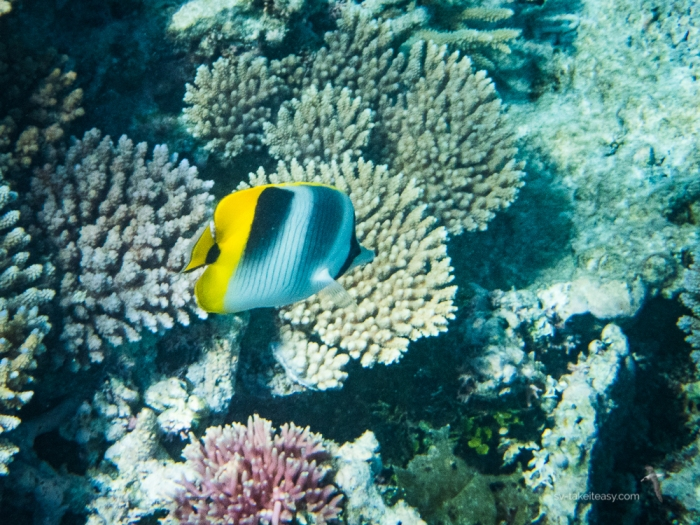 Wistari Reef -7180006.jpg