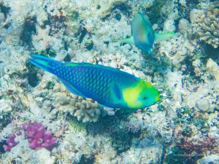 Wistari Reef -7180030.jpg