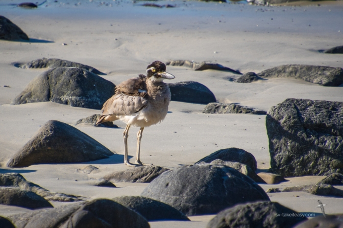 Curlew Island -9324