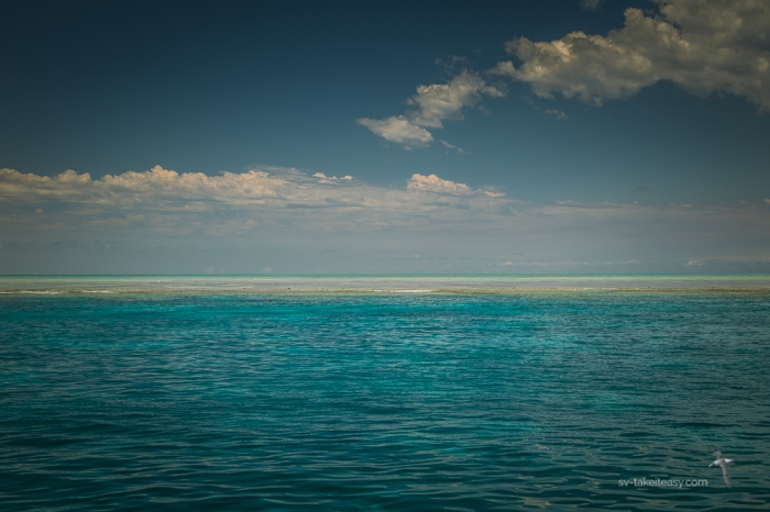 Fitzroy Reef -0660
