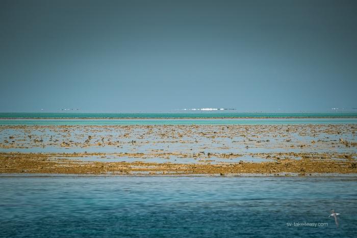 Fitzroy Reef -0664