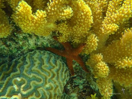 A mix of soft corals