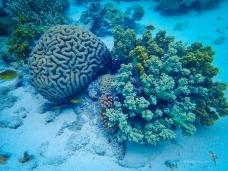 Brain coral and broccoli!