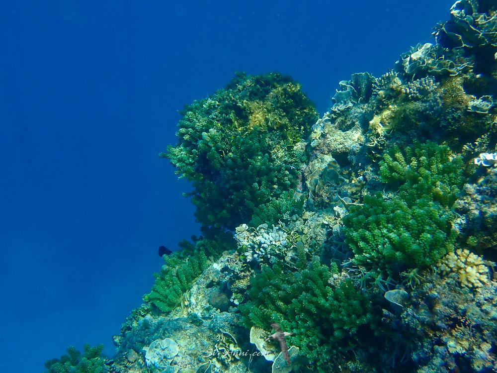 Bait Reef Coral Gardens