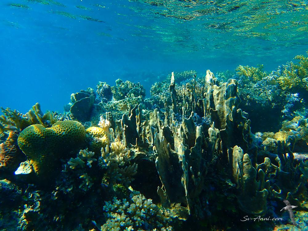 Bait Reef Soft Corals