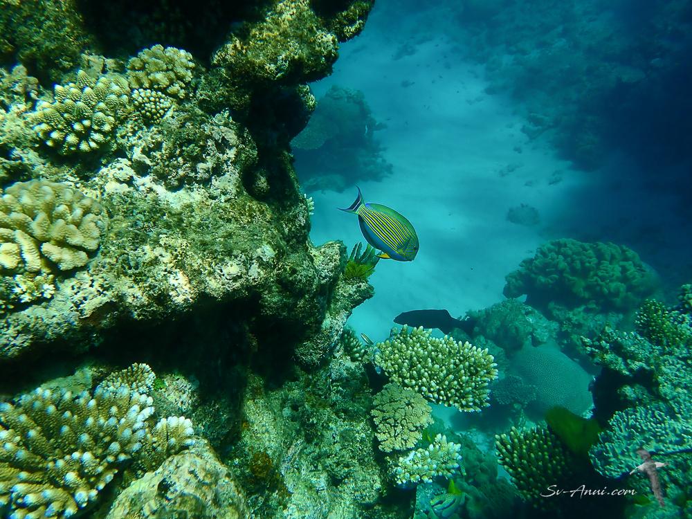 Milln Reef