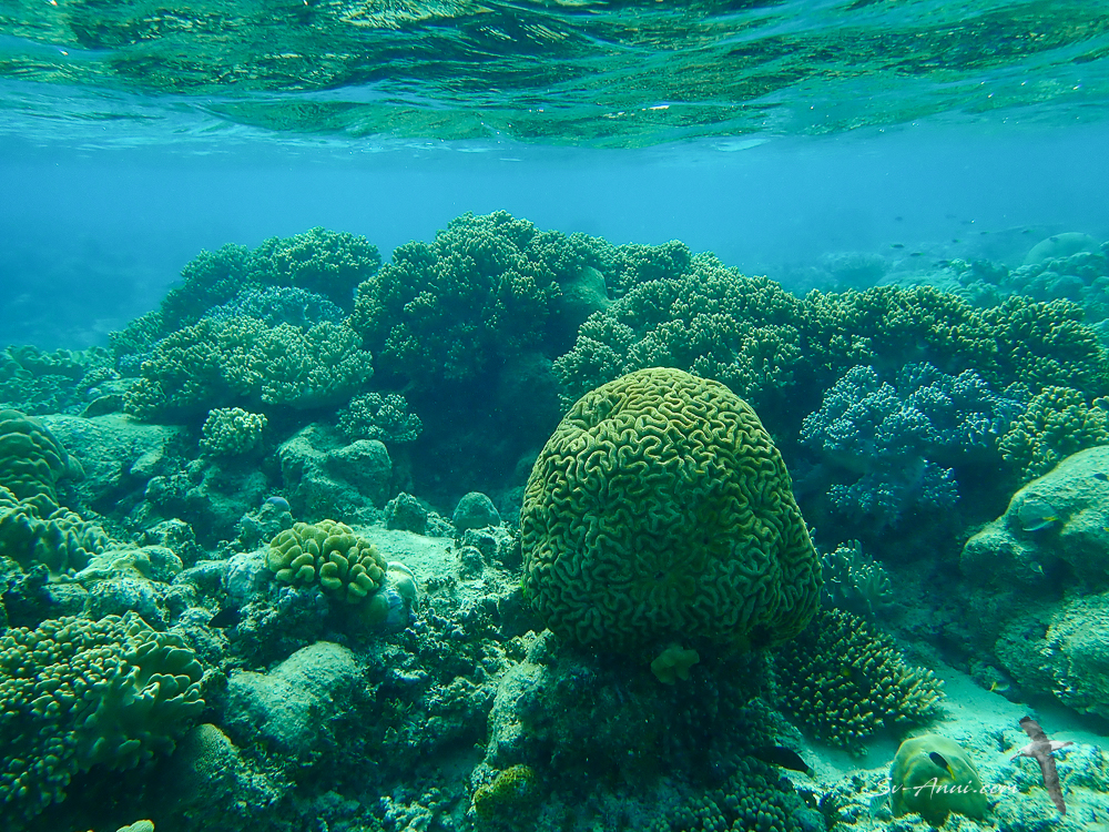 Sudbury Reef