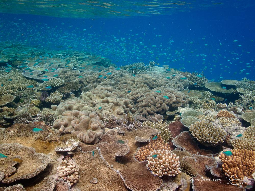 Coral wall at John Brewer Reef