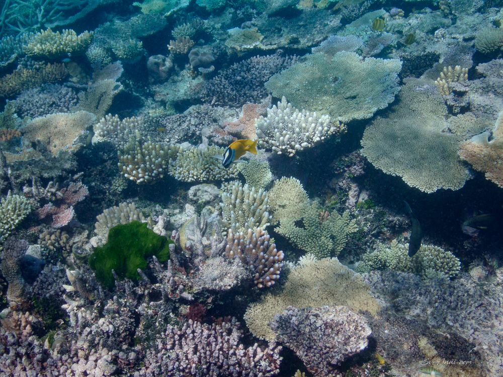Keeper Reef coral