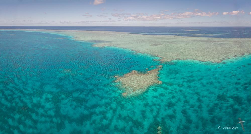 Little Bugatti Reef