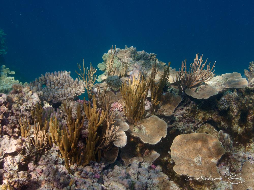 Corals at Bugatti Reef