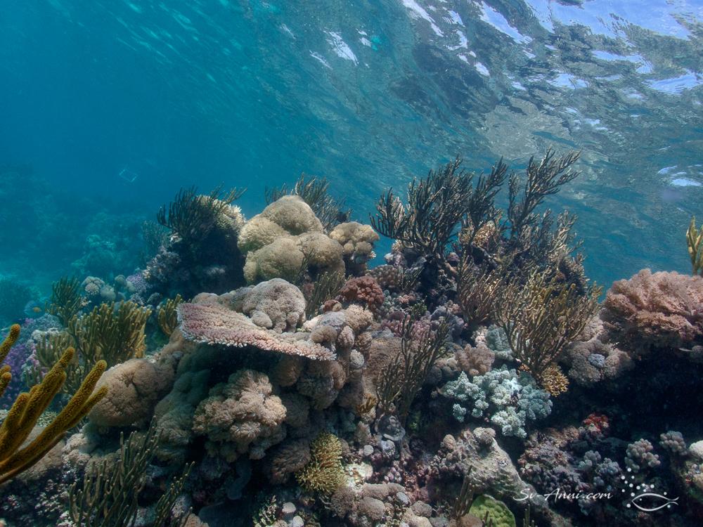 Rich coral cover at Little Bugatti