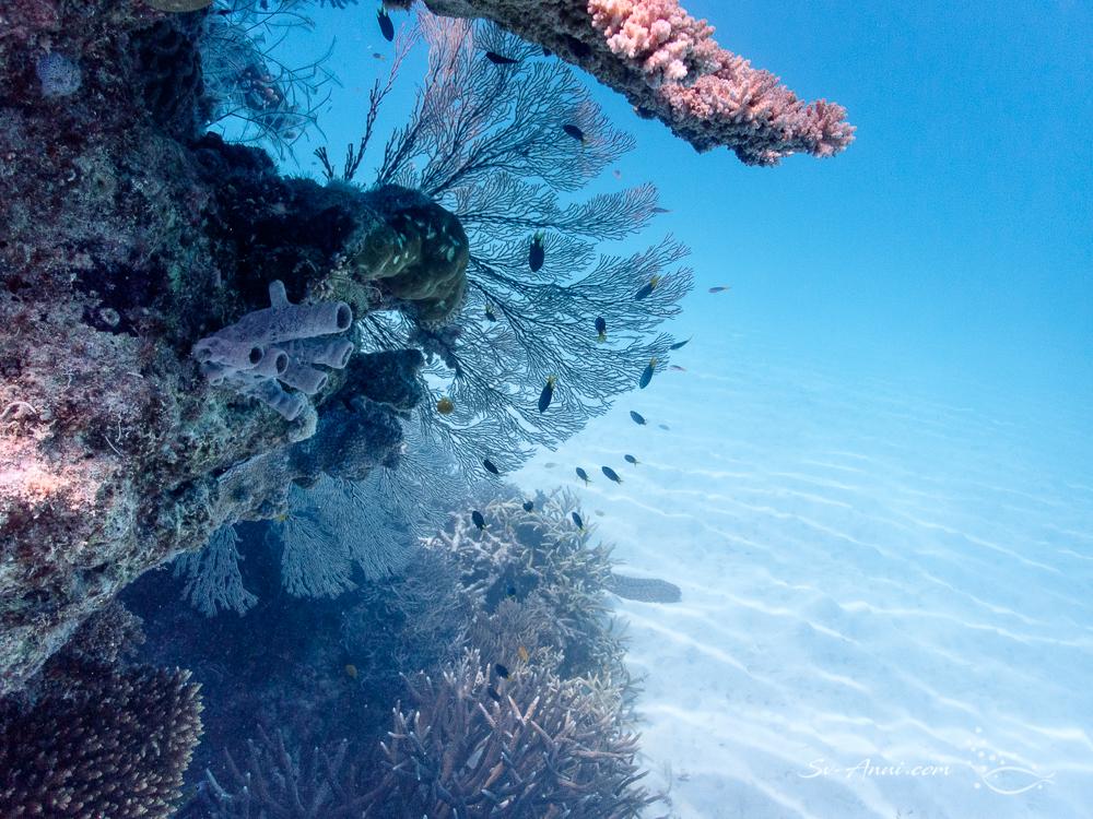 Gorgonian Fan & Sponges