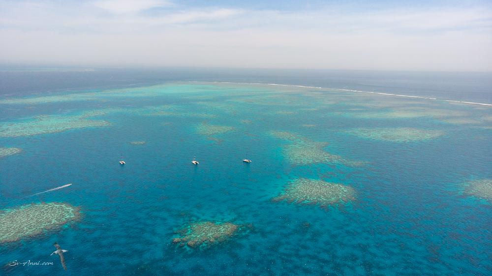 Agincourt Reef #4